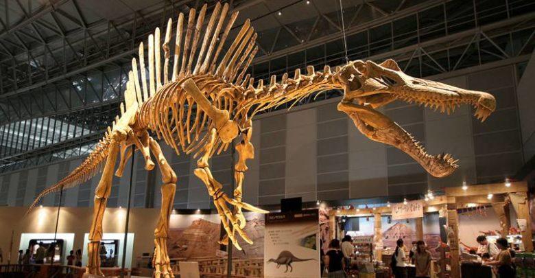 Photo of The heaviest predatory dinosaurs. Theropods Top 10