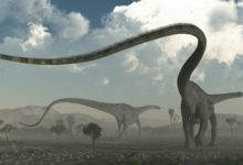 Photo of The longest dinosaurs. Sauropods top 10