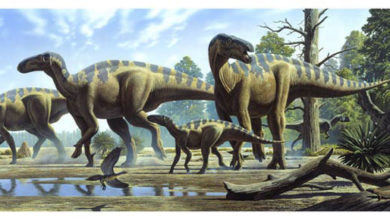 Photo of The longest and largest ornithopods