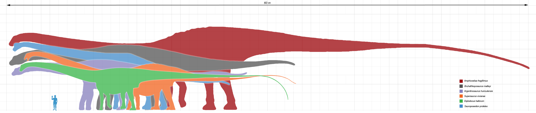 The longest dinosaurs - longest sauropods.