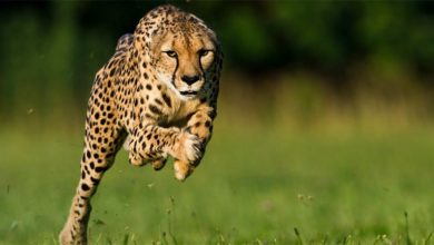 Photo of The fastest animals in the world – Top 10