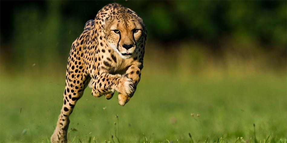 The fastest animals Top 10  Animals speed | DinoAnimals com