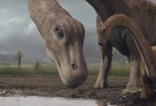 Photo of The shortest sauropods – Top 10
