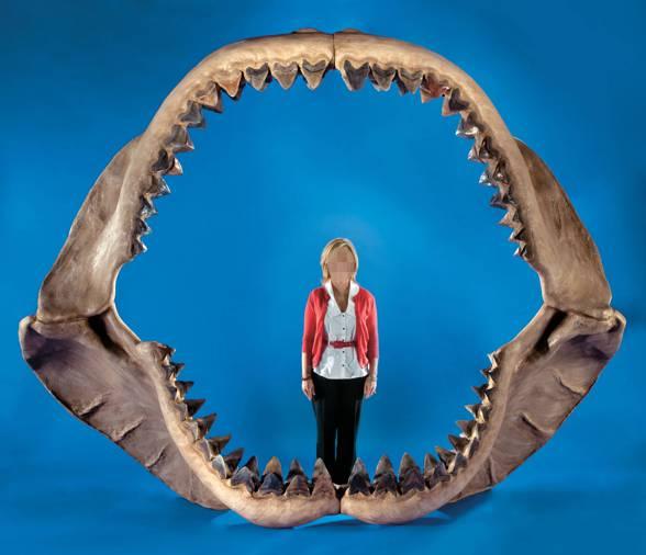 Megalodon (Carcharodon megalodon / Carcharocles megalodon)