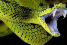 Photo of The most venomous snakes – Top 10