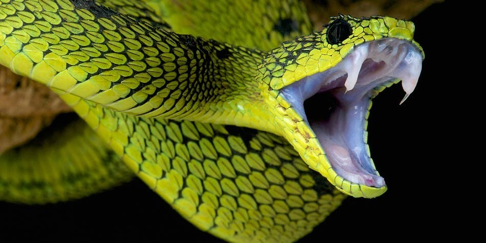 New nanogel neutralizes deadly snake venom
