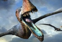 Photo of The largest pterosaurs – Top 10