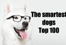 Photo of The smartest dogs – Top 10