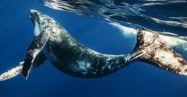 Photo of The longest whales – TOP 10