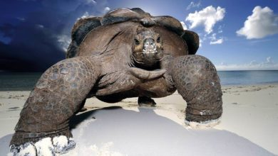 Photo of The largest (heaviest & longest) turtles – Top 10