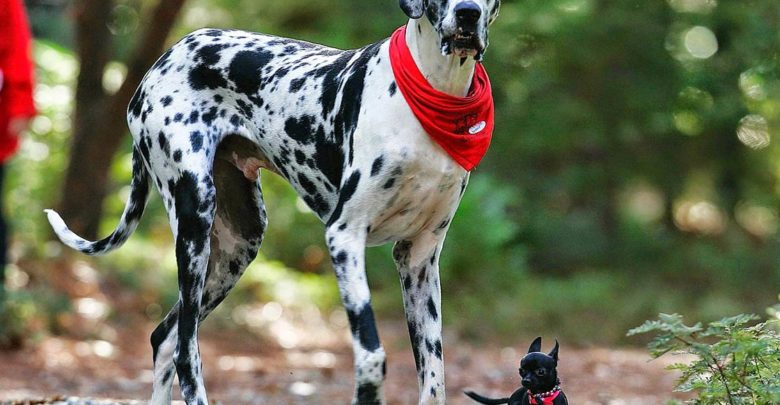 Photo of The tallest dogs – TOP 10