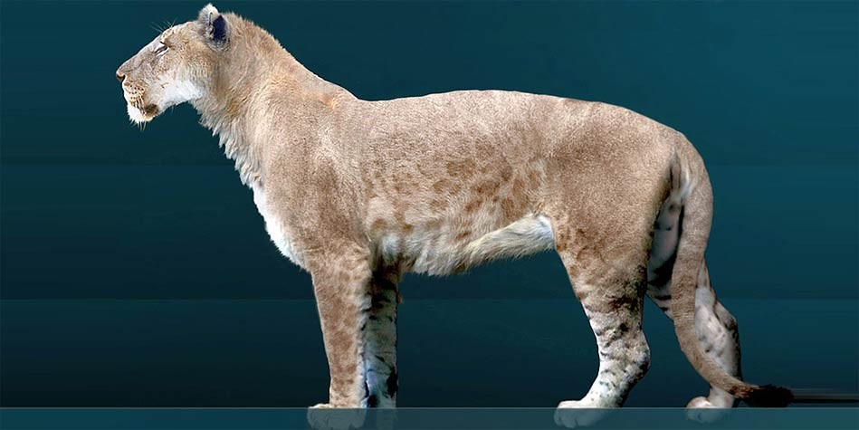 American lion - the largest lion in history | DinoAnimals.com