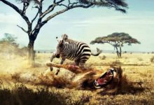Photo of Fights of animals – Animal Battles