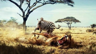 Photo of Fights of animals – Animal Battles