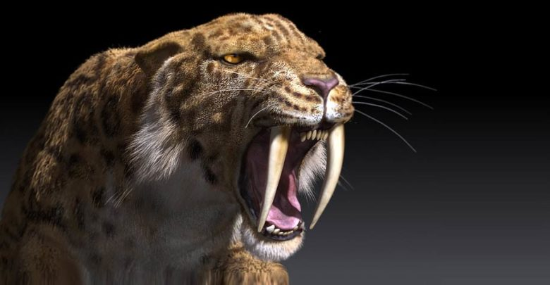 Photo of The saber-toothed tiger (Smilodon)
