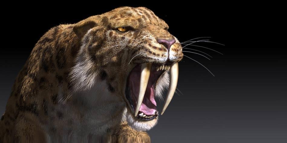 The Saber Toothed Tiger Smilodon Dinoanimals Com