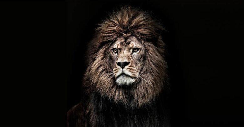 Photo of Barbary lion – Atlas lion