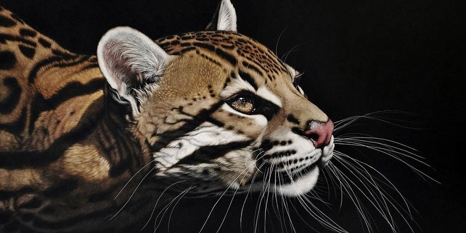 Photo of Ocelot – the most beautiful cat in the world
