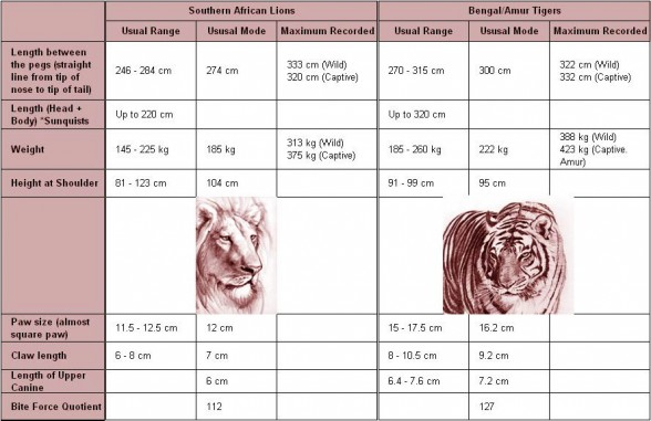 Lion vs tiger - comparison