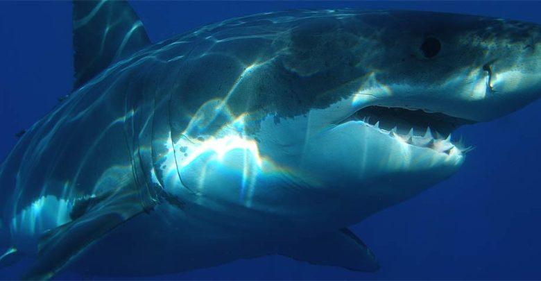 Photo of Megalodon – a prehistoric shark