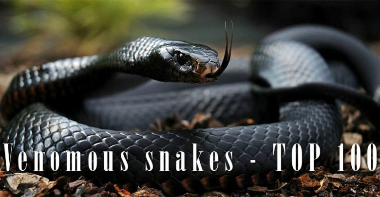 Photo of Most venomous snakes – TOP 10 & TOP 100