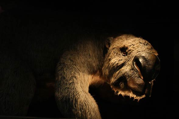 Diprotodon - the largest known marsupial ever to have lived.