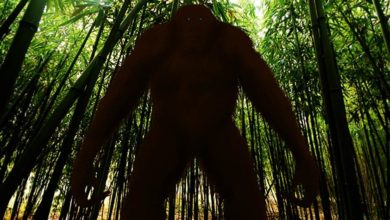 Photo of Gigantopithecus – largest ape ever lived