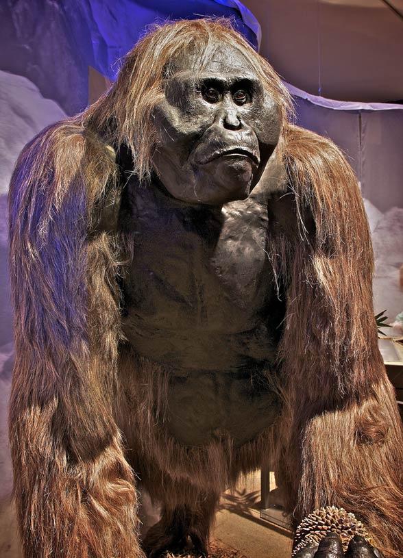 Gigantopithecus Gigantopithecus – la...