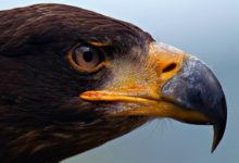 Photo of The largest and most powerful birds of prey – Top 10