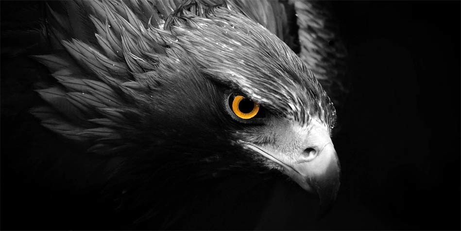 Haast's eagle – the largest eagle that existed ...