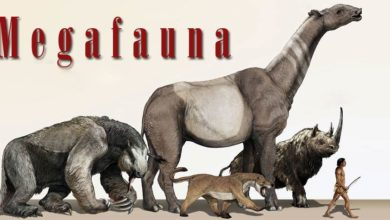 Photo of Megafauna – big animals