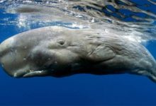 Photo of Sperm whale – Moby Dick whale