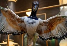 Photo of Archaeopteryx – the first bird