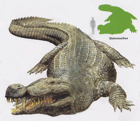 Deinosuchus - human size comparison.