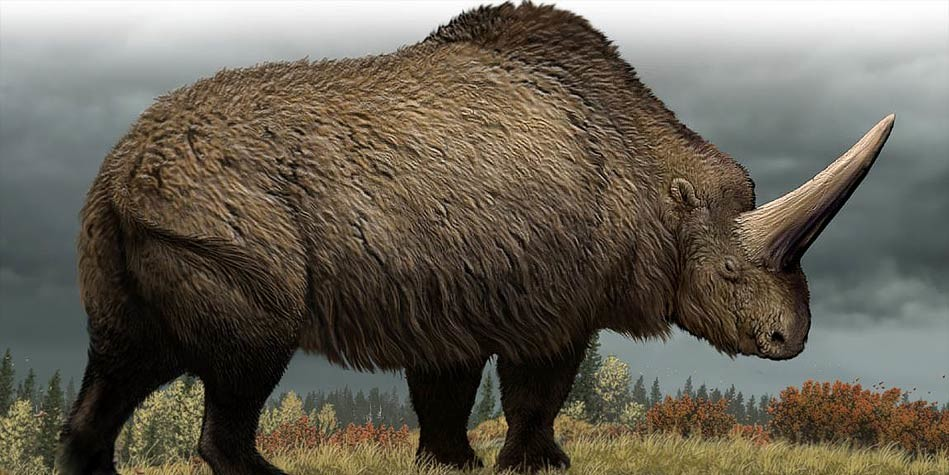 Image result for large prehistoric mammals