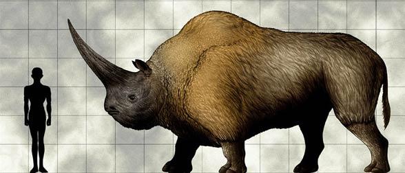 Elasmotherium - human size comparison.