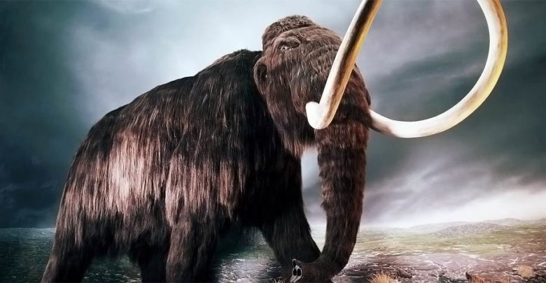 Photo of Mammoth (Mammuthus) – a prehistoric elephant