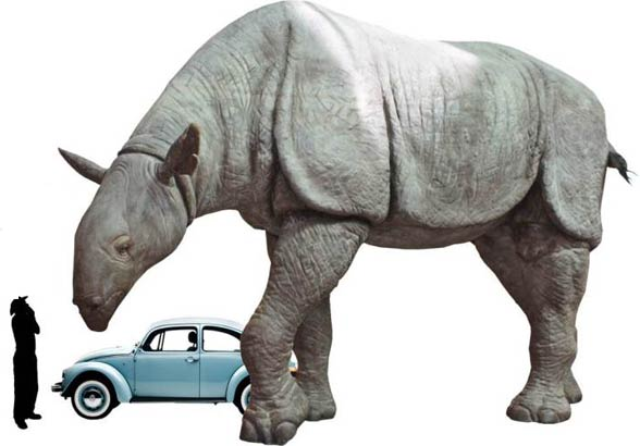 Image result for images of baluchitherium
