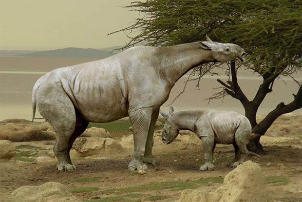 Indricotherium, Paraceratherium, Baluchitherium
