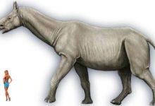 Photo of Paraceratherium, Indricotherium, Baluchitherium