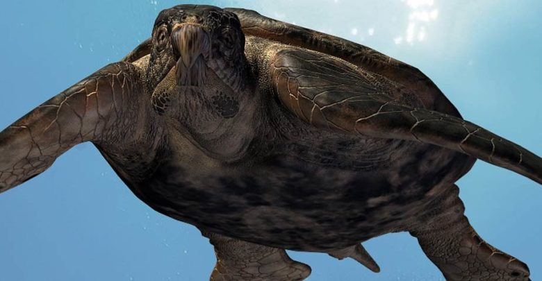 Photo of Archelon ischyros – the largest known turtle