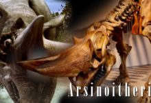 Photo of Arsinoitherium – the Eocene giant