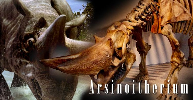 Photo of Arsinoitherium – the Eocene giant