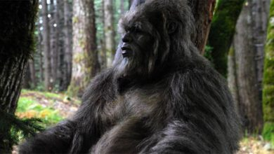 Photo of Bigfoot or Sasquatch – does it exist?