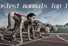 Photo of The fastest mammals – Top 10