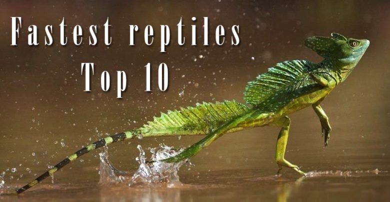 Photo of The fastest reptiles – Top 10