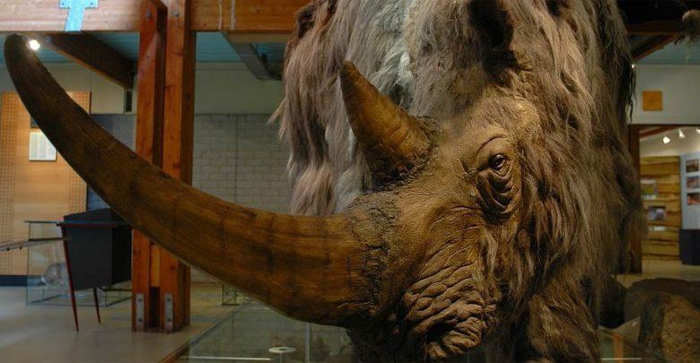 Photo of Woolly rhinoceros – Pleistocene rhino