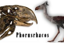 Photo of Phorusrhacos – a scary bird