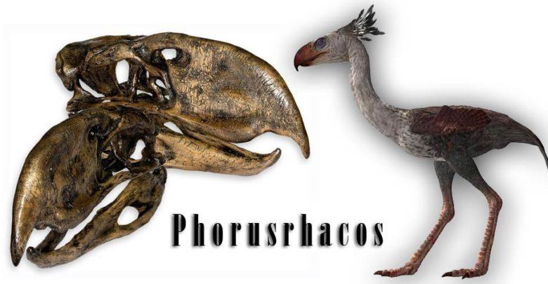 Photo of Phorusrhacos – a scary bird