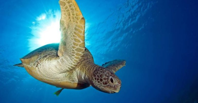 Photo of Turtles and tortoises – long-lived reptiles